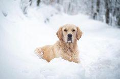 happy friday friends, enjoy your weekend ❄️ Wir wünschen euch ein schönes Wochenende, genießt den Schnee solange er da ist! Weekender, Happy Friday, Instagram Feed, Friends, Animals, Angel, Have A Good Weekend, Snow, Nice Asses