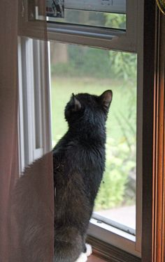 image of a cat sitting in the window, looking up