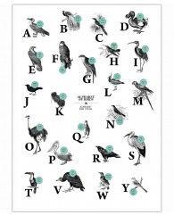 alphabet of birds, animal ABC-Poster