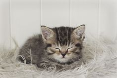 sleepy kitty   Flickr - Photo Sharing!