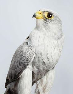 Leila Jeffreys Photographie Des Portraits D'oiseaux Exotiques                                                                                                                                                                                 More