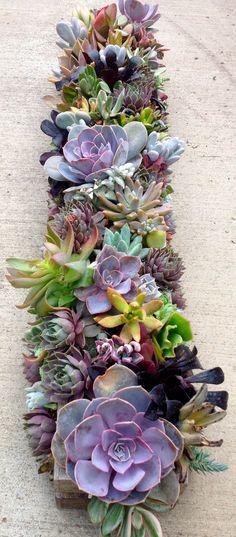 succulents In a box for on the floor of the fireplace