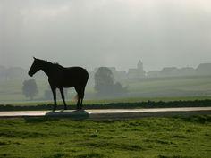 Jura - Im Land der Freiberger - Das Königreich der Pferde - Spot Magazine