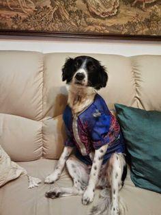 Crazy and Sweet Pets: Che freddo, come possiamo aiutare i nostri Pet ad ...