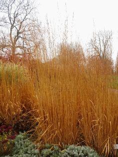 Peter janke gartenkonzepte gartenplanung grasses for Peter janke design mit pflanzen