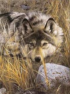 One of my favorite animals, the wolf.The wolf pack is a natural parrell to my family. We are very close and do everything together.