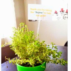 """Teacher gift we made for our kids teacher gifts. Card reads """"thank you for taking the """"thyme"""" to help me grow!"""" I found this idea years ago in Crafts magazine."""