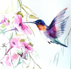 Hummingbird Original watercolor painting 12 X 12 by ORIGINALONLY, $36.00