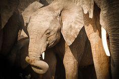 'Little Elephant' von martin buschmann bei artflakes.com als Poster oder Kunstdruck $20.79