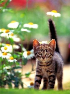Cats, Animals, Gatos, Animales, Animaux, Animal, Cat, Animais, Kitty