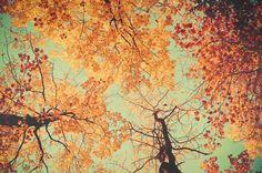 yellow tree photograph . october decor . orange por joystclaire