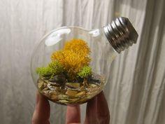 3. Террариумы из лампочек