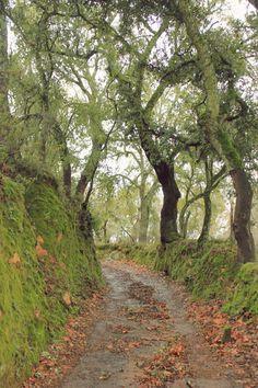 Sierra de Aracena, Huelva   Spain (by Nacho Coca)