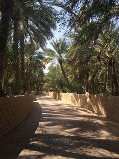 A picture heavy travel diary of our trip to Dubai. Singapore Travel, Dubai Travel, Abu Dhabi, Visit Dubai, Desert Life, Urban Life, United Arab Emirates, Places To See, Nature Photography