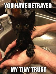 Wet little black kitten looks so pathetic in the hand washing it in the kitchen sink. Poor baby says in poster YOU HAVE BETRAYED MY TINY TRUST, with big deeply sad eyes. How sad when we MUST do something to help someone knowing that they'll hate us until they figure out that we made their lives much happier in the long run. -DdO:) > http://www.pinterest.com/DianaDeeOsborne/funky-mood-lifters - Pin via Emily Ledford