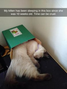 Here is a daily dose of funny animal pictures of the day - Wackyy animal picdump If you are an animal lover and looking for animal humor, then you like these funny animal pics and memes of the day. Funny Animal Memes, Cute Funny Animals, Funny Cute, Funny Dogs, Funny Memes, Humorous Animals, Funniest Animals, Funny Pictures With Captions, Funny Animal Pictures