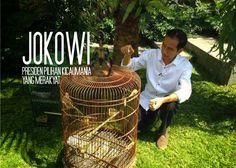 Pak Jokowi , Presiden Pilihan Rakyat dan Kicaumania   Burung Nusantara
