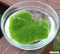 Простой эксперимент поможет наглядно показать как дышат растения.