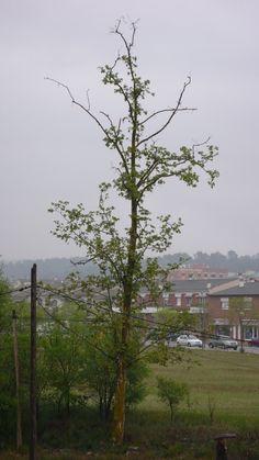 A Tree.