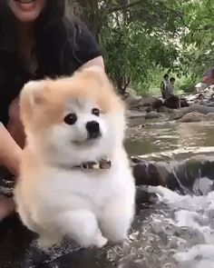 New trending GIF on Giphy. dog water puppy paddling. Follow Me CooliPhone6Case on Twitter Facebook Google Instagram LinkedIn Blogger Tumblr Youtube
