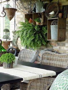Another one of my favorites large Boston ferns. They look great hanging inside in a sunroom. This will not survive in the winter here in New England. Great summer plant ask your garden shop for help on caring for this plant. I have two large hanging plants in my sun room from June to late September....