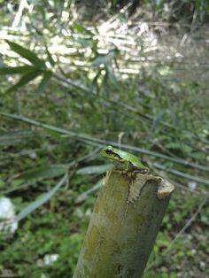 flog on bamboo
