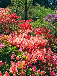 Beautiful flowers in bloom at The Glades, #Surrey, BC