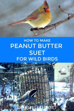 This homemade peanut butter suet recipe is for wild birds in the winter when food is scarce. Baby Bird Food, Wild Bird Food, Wild Birds, Feeding Birds In Winter, Suet Bird Feeder, Suet Cakes, Bird Seed Ornaments, Homemade Bird Feeders, Backyard Birds