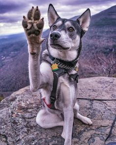 High five it's Friday! Where are you adventuring this weekend? #campingwithdogs @erinandadventuredog by campingwithdogs