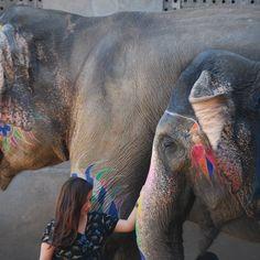 Fotografía: Maricel Abarzua - Jaipur Taj Mahal, Varanasi, Jaipur, Nepal, Elephant, India, Animals, Evening Prayer, Goa India