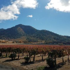 Beautiful Fall day in the vineyard - Troon Vineyard - Applegate Valley Oregon