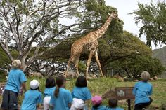 Honolulu Zoo ~ Learn about different family activities on Oahu! ~ Hooked on Travel