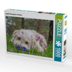 And darling if you love me, bring me Enzian...at least that is what Mascarpone loves. Look at the color harmony eyes vs flowers. A must have.  #lagottoromagnolo #enzian #nature #sweet #wuffclickpic #wemakedogsromantic #puzzle