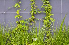 Why install a green wall?