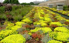 green roof plants california - Google Search