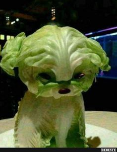 Lettuce Puppy Will Make You Swear Off Vegetables - Food Carving Ideas Veggie Art, Fruit And Vegetable Carving, Veggie Food, Food Design, Cute Food, Good Food, Awesome Food, Food Sculpture, Fruit Sculptures