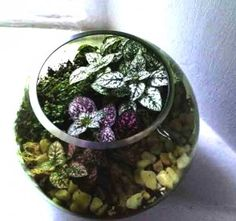 Make a homemade terrarium - it's so easy: Just grab a glass container, and fill it with some stones, moist soil & small sections of houseplants that can be divided or rooted. Garden Crafts For Kids, Garden Projects, Garden Ideas, Backyard Ideas, Kids Crafts, Love Garden, Easy Garden, Garden Path, Farm Gardens