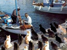 A beach and fishing area in Italy.  The cats are waiting for their meal.