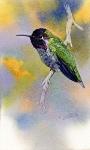 Anna's Hummingbird by Joe Garcia Watercolor ~ 7 x 4.25
