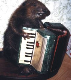 Anthropomorphic taxidermy AND an accordian…can it get any better?!
