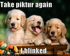 Google Image Result for http://images.blogskins.com/skin_images/321/560/images/cute-puppy-pictures-puppy-blinked-picture.jpg