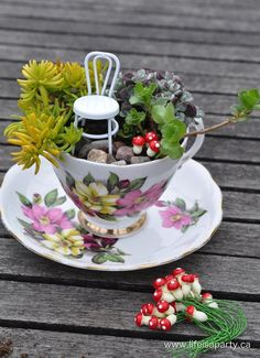 Teacup Fairy Garden -How to make the sweetest teacup fairy garden with succulents, including how to make a mini fairy-sized cupcake and book out of polymer clay.