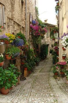 Spello, il borgo dei fiori!