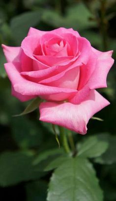 Pink { ♡ }