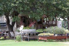 My cousins lavender farm,  Lavender Ridge Farms; Gainesville, Texas. So beautiful.