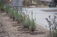 Mese a Csodaházról, avagy egy hartai sváb parasztház új élete Vineyard, Country Roads, Plants, Outdoor, Outdoors, Plant, Outdoor Games, Planting, Planets