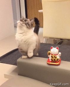 """Who is cuter me or the """"lucky cat"""""""