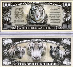 The White Bengal Tiger - Panthera Series Million Dollar Novelty Money Bear Cubs, Grizzly Bears, Tiger Cubs, Tiger Tiger, White Bengal Tiger, Disney Activities, Cute Baby Animals, Wild Animals, Money Bill