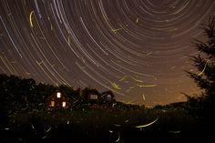 Stars and Fireflies (Mike Rosinski)