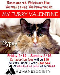 #Champaign #Urbana #IL @CUHumane Pretty kitty GYSPY is in search of her FOREVER HOME!  Shared via the Champaign County Humane Society: Is your ideal Furry Valentine is a kitty? Hey - take a look at Gypsy! Is she a looker or what?   (SEE MORE INFO ON GYPSY IN COMMENTS BELOW!)